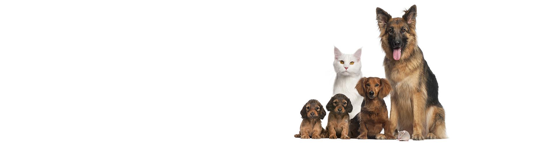 Comprometidos con el bienestar de tu mascota