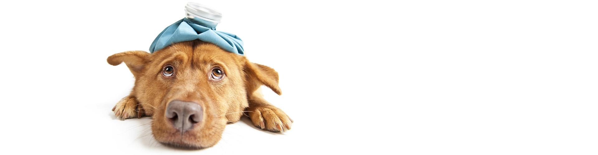 Clínica veterinaria El Molinar